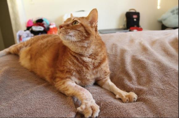 【ネコ助け】引っ越し先を探して空き家を内見 → 1匹のネコが置いてけぼりにされていた! → 可哀想になって自分の家に連れて帰る
