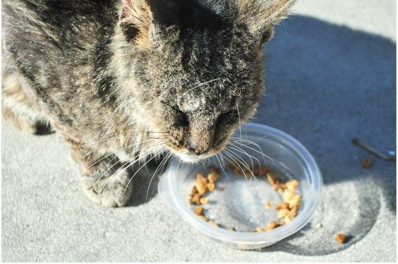 【子ネコ助け】目が見えなくてボロボロのノラ子ネコを救いたい! 回復過程をウェブカメラで全世界に発信 / みなさんの応援で医療費が集まる