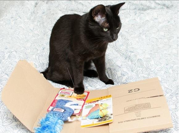 ネコ用オモチャを買ったのにメール便で届く →「段ボールじゃなくてガッカリニャ」とネコクレーム → Amazonが絶妙なユーモアで神対応!