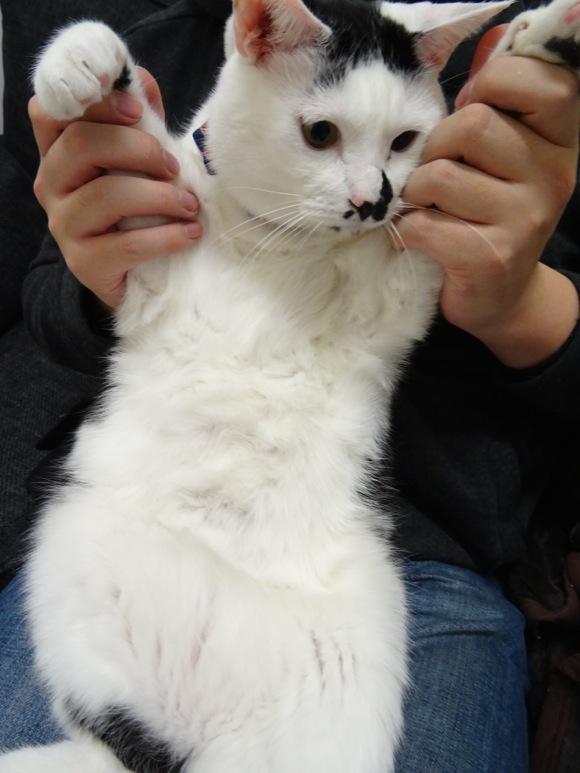 【みんな知ってるあたりまえ知識】「ネコの乳首の数」って個体によってそれぞれ違うのニャ / その理由は解明されていないらしいニャ