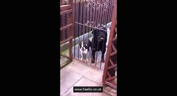 【衝撃映像】人面犬でも犬面人でもない! 世界にはしゃべれるワンちゃんがいた!!