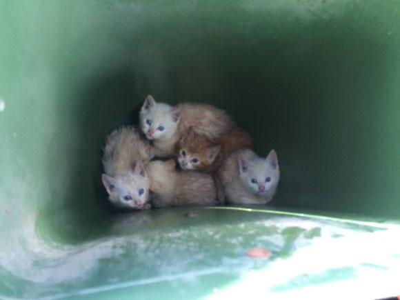 【動画あり】5匹の子猫がゴミ箱から救助される → 洗ってケアしたら悶絶可愛いふわもこ子猫ニャン登場!! キュートな姿に世界70カ国からキュン死宣言!