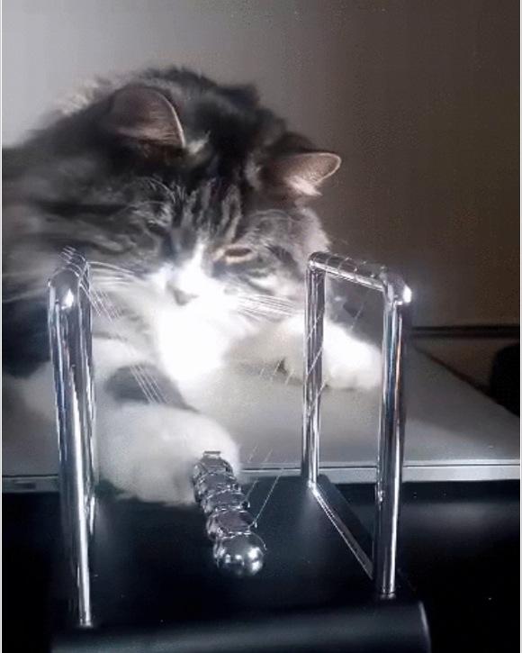 """【俺のネコって天才だろ!】通称 """"カチカチボール"""" で遊ぶニャンコ GIF動画に「スゲ〜」「ウチのネコと大違いだ」とネット住民が興奮!"""