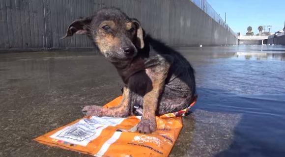 【動画あり】虐待され川に捨てられた子犬を救出「生きているのが不思議」な程ボロボロ状態から元気いっぱいに! 良かった!! でも涙が止まらない……