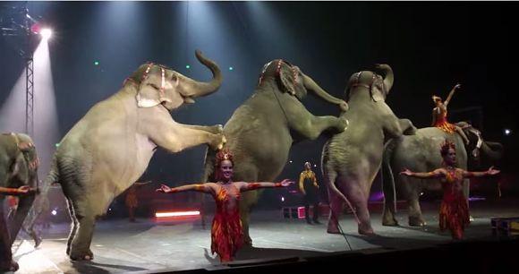 【象が消える日】大手サーカス「2018年までに象を引退させる」と発表 / 理由は動物愛護など 「素晴らしい」「なぜ3年もかかる」と世界から意見様々