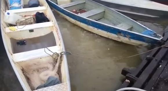 【恐怖映像】ピラニアが潜む川に肉塊を投げ込んだら地獄絵図のようになる