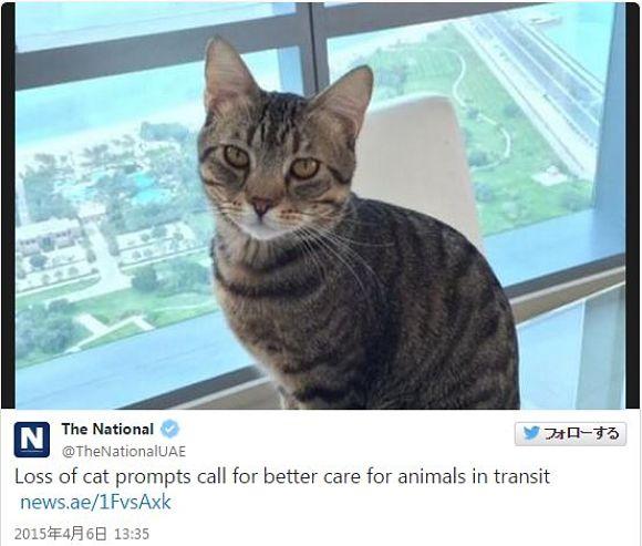 【これはヒドイ】飛行機に乗せていたネコが空港で失踪! スタッフがケージを乱暴に扱い破損させたことが原因か