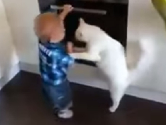 ネコが幼児に「それは止めとけ」と言っているかのような動画が話題 / 幼児のピンチをネコが救った感動の瞬間か!? それとも……