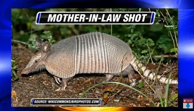 アルマジロの鎧は硬いぞ!! ある男性が「アルマジロを銃で撃ったら弾が跳ね返って義母に命中」しちゃった件