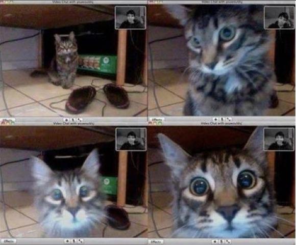 【キュン死】旅先から飼いネコに Skype で話しかけてみた! 「飼い主さんの声はするのに……」とキョトキョトとするネコ様に萌えキュン死