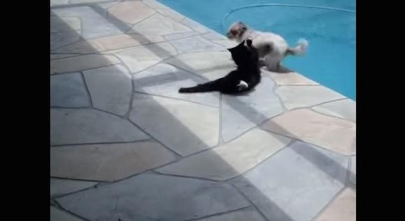 【衝撃動物動画】昼寝を邪魔された猫の「激おこ」する瞬間が激撮される