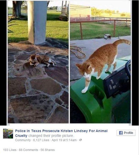 女性獣医師がネコを矢で射殺 →「私って最高!」とネコの死体との記念写真をアップ → 世界から非難殺到 / 飼いネコだった可能性も