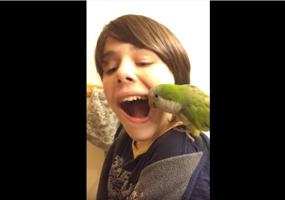 【動画】なにやってるのーーー!? 少年の乳歯を引っこ抜くオウム / 少年「もう5本も歯を抜いてくれたんだ!」