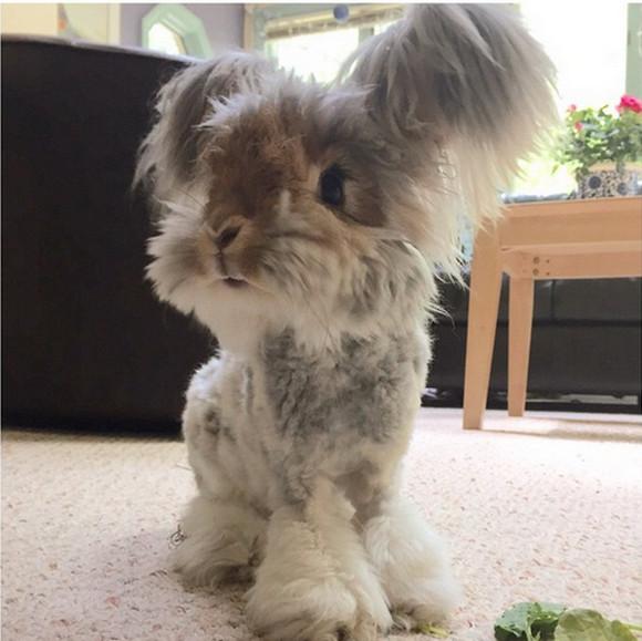 """【モフモフ速報】お耳に """"天使の羽"""" をもつウサギ!! 着ぐるみかと思ったら本物のモフっ子ウサちゃんだった!"""