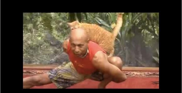 【ホコタテ動画】ネコ vs ヨガの達人!「遊ぼうよ〜」と可愛く誘うネコに「何があっても集中するんだ」と耐えるヨガの達人