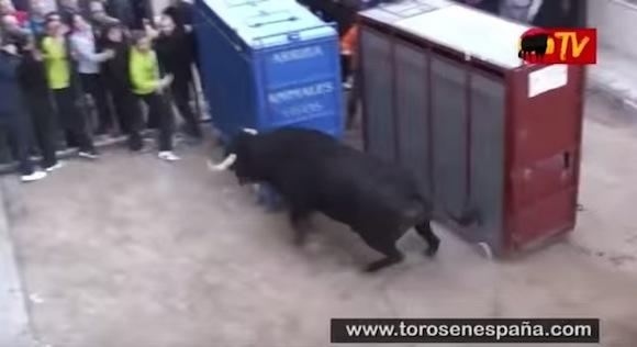 【衝撃動物動画】想像を絶するほどの破壊力! 檻から逃げ出す闘牛がヤバいくらい強烈!!