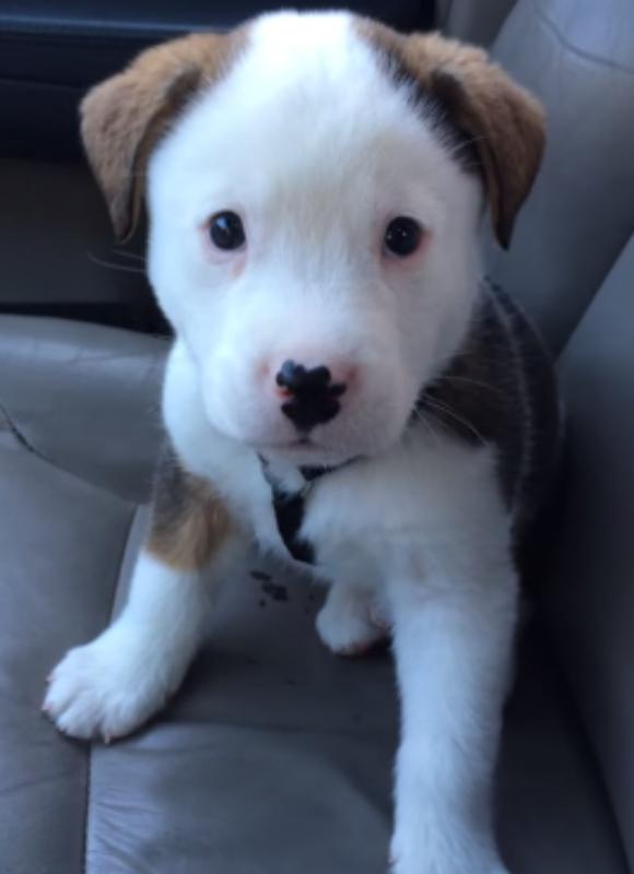 生後8週間の子犬が自分のシャックリに自分でビックリ! その姿に悶絶死するネットユーザーが続出中