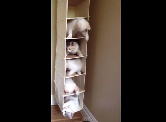 【謎の中毒性】気付いたらボ〜っと何回も見てしまうこと必至の「ネコ・マンション動画」