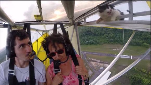 【衝撃ニャンコ動画】飛行機が大空へ向かってテイクオフ! → 翼に猫がしがみついていたことが判明 → そのままニャンコと空中散歩へ