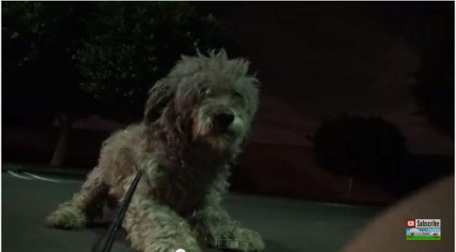 人間を信じていいの? 保護された子犬の怯えきった瞳に信頼の光が戻るまでの動画が涙なくして見られない