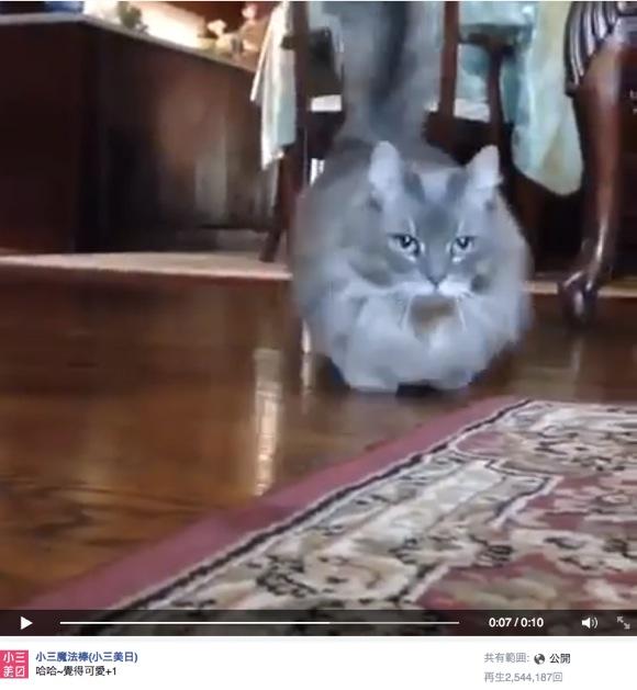「ファッ!? オモチャのネコかな? → いや本物のネコだった! 」っていう動画が大・人・気!! 再生回数250万越えの大ウケに
