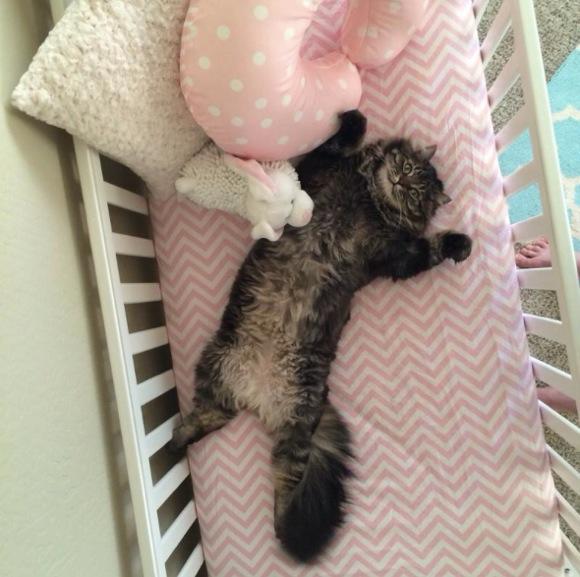 産まれてくる赤ちゃんのためにベッドを組み立てる → ニャンコ「僕のものニャ!」とドヤ顔で乗っ取る → 飼い主「どうやってネコを説得しよう……」