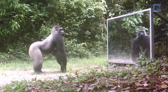 【衝撃実験動画】鏡で初めて自分自身を見た動物がとった驚くべき反応