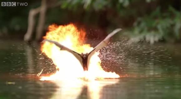 【クロコダイル vs コウモリ】自然ドキュメンタリー映像にハリウッドのようなエフェクトを加えたらこうなった