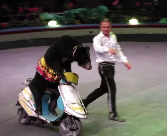 【社会主義すごすぎ】ベトナム・ハノイのサーカスでバイク好きの熊と出会った! Byクーロン黒沢