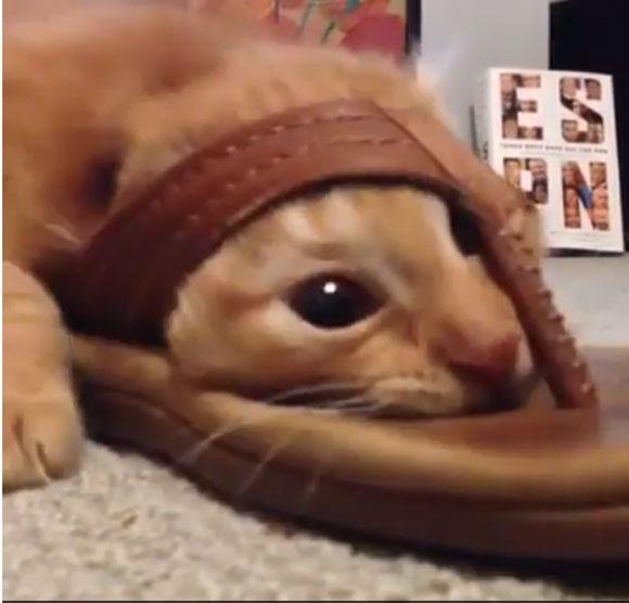 斬新すぎる方法で『サンダル遊び』をするニャンコが激撮される!!