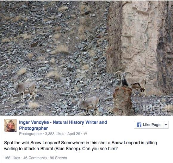 """【難易度 E】この写真の中に """"ユキヒョウ"""" が隠れているよ! どこにいるか分かるかな?"""