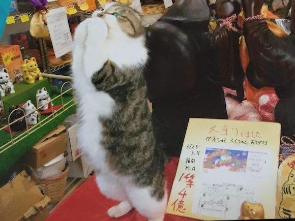 【最強パワースポット】佐賀県の離島に宝くじを当てる「リアル招き猫」がいる