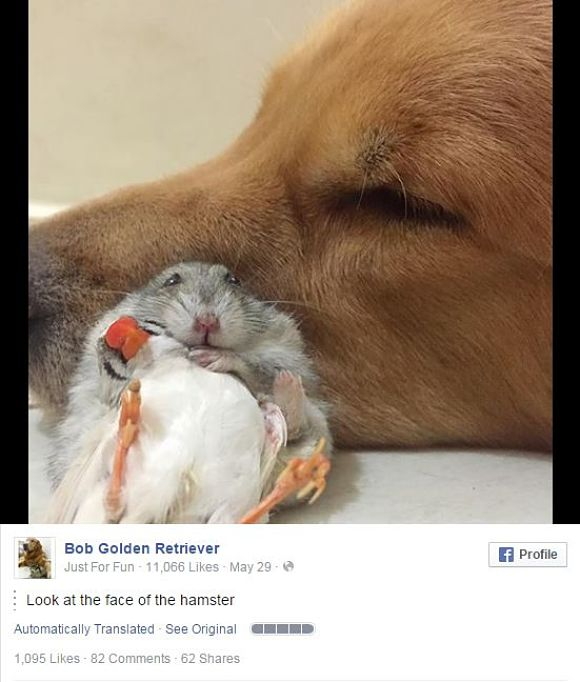 【画像多数】なんだこの仲良しっぷりは!ハム・チュン子・ワンコのほんわか動物一家に混ざりた〜い!!