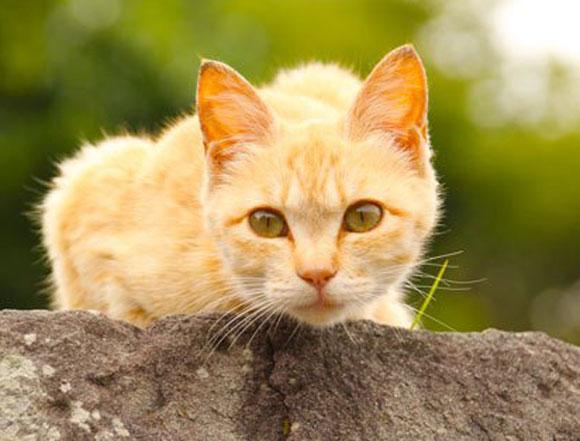【祝・世界猫の日】今日はネコ動画でお祝いだ! ロケットニュース的「上半期もっとも人気があったニャンコ動画TOP5」