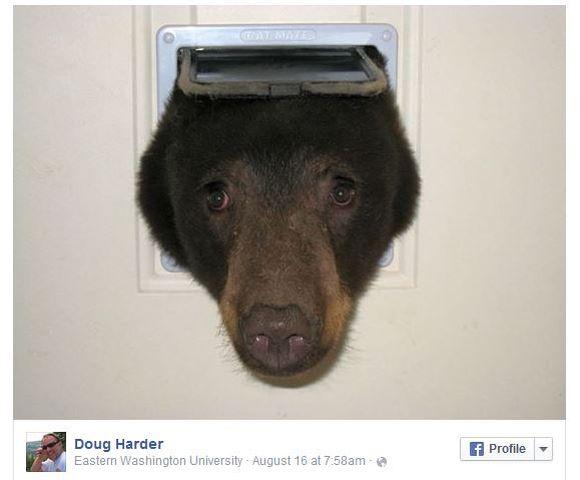 ニャンコ用の扉から侵入しようとした泥棒クマが決定的な写真を激写される!! おマヌケなんだけど超カワいい!