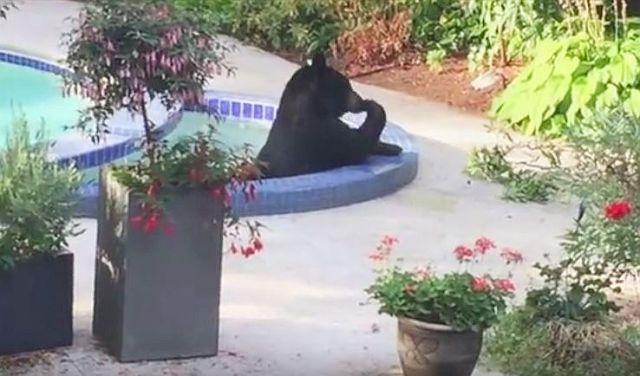 ますますクマが人間化!! 「ジャグジーでくつろぎまくるクマ」が人様の裏庭で勝手にスパ・トリートメント!