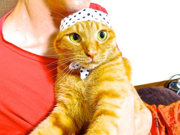 """【正直レビュー】話題のネコ用ガチャ「ねこ泥棒」! """"ニャンコ専用ほっかむり"""" を飼いネコさんに試してもらったよ!!"""