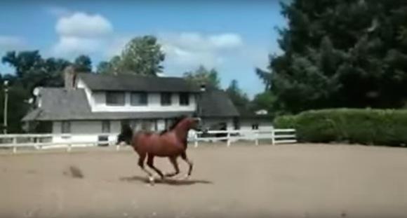 【衝撃動画】ヘッドスライディングで脱走する馬