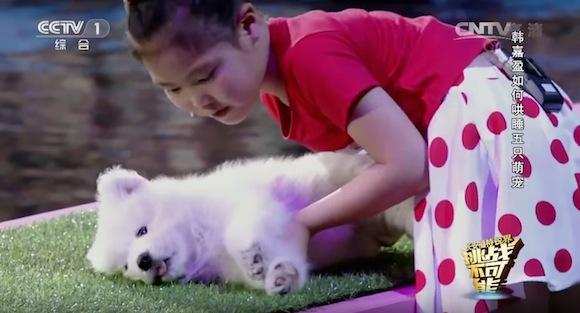 【超能力】マッハの速さで寝かしつけ! 撫でるだけで動物を眠らせてしまう中国人少女がスゴすぎる!!