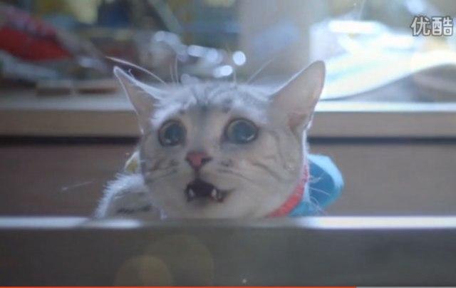 【動画あり】中国の実写版『ドラえもん』が斜め上すぎ! ドラえもん役に本物の猫を起用!! ウルトラの母っぽい何かもいるカオス仕様と判明