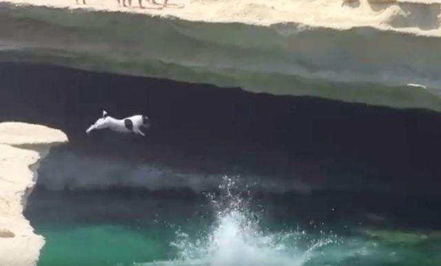【動画あり】人間の真似をして超高い崖からジャンプするワンコが大人気!! ワンコから「ある人生哲学」も学べちゃうぞ!