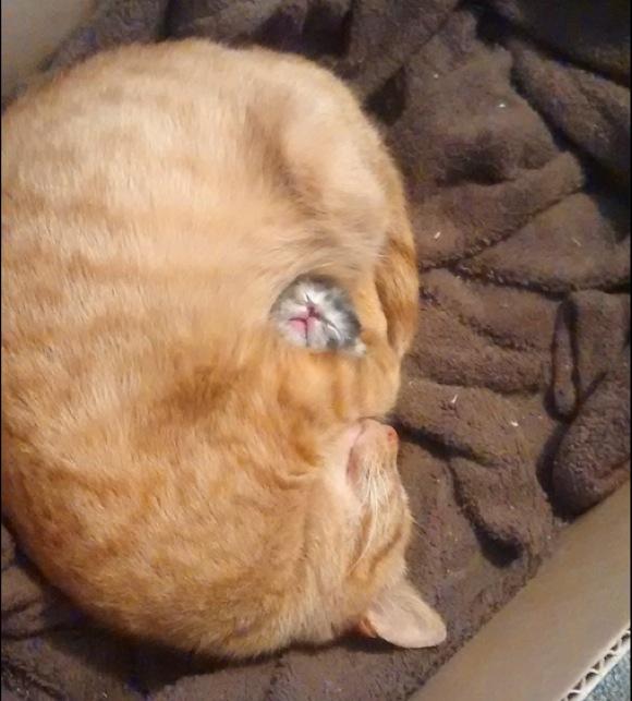 み〜んな無敵っ子! 色々な動物の赤ちゃんの写真&動画20選だぞ〜!!