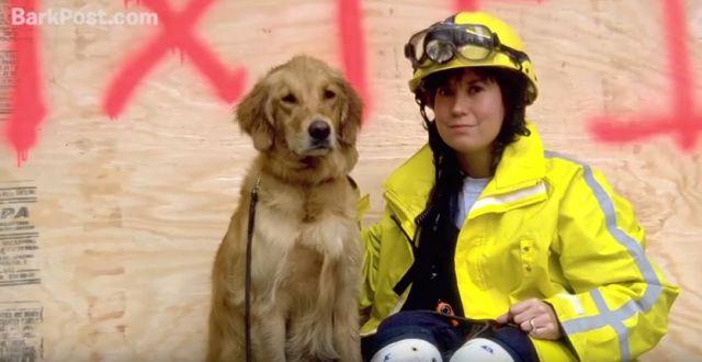 米同時多発テロ事件のグラウンド・ゼロで活躍した救助犬が「16歳の誕生日」を豪勢にお祝い!! リムジンでのお出迎えに始まり様々なサプライズが!