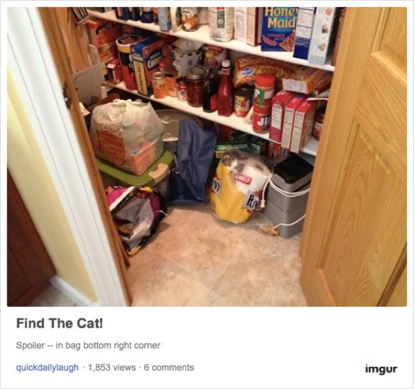 【ニャンコを探せ】17枚の写真の中にネコが隠れているよ! あなたは見つけられるかな?