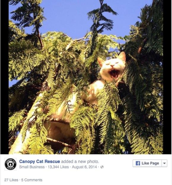 【動画あり】高〜い木の上から降りられなくなったニャンコをお助け! 専門レスキュー部隊が素晴らしくカッケー!!