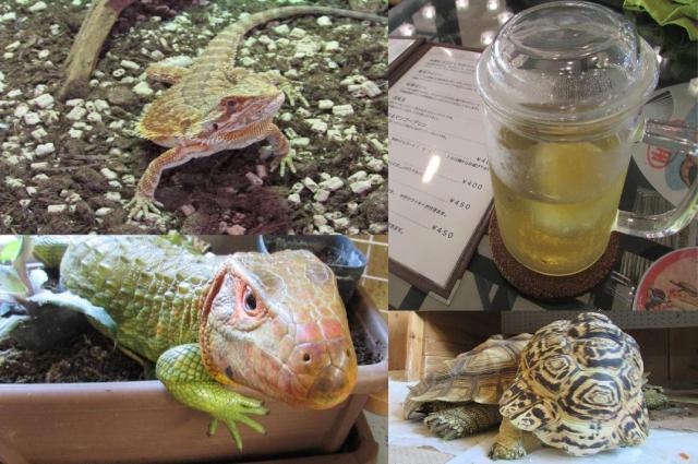 【ド迫力】シルバーウィークにオススメ!「爬虫類カフェ」で亀やトカゲとふれ合ってきたらマナーの大切さを学べてた