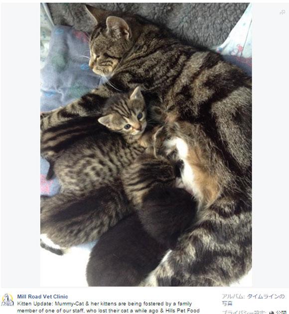 やはり母は子を忘れない! 「捨てられた子猫を保護したら母猫が迎えにやって来た」ストーリーがほのぼのな件