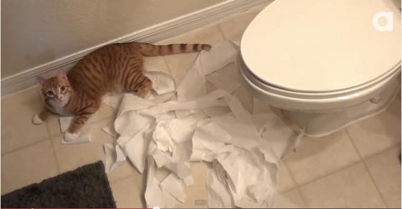 """【ニャンコ動画】気付いて! ネコは人間をこんなにも愛しているんだよ!! 10の """"ラブ・サイン"""" がコレだ"""