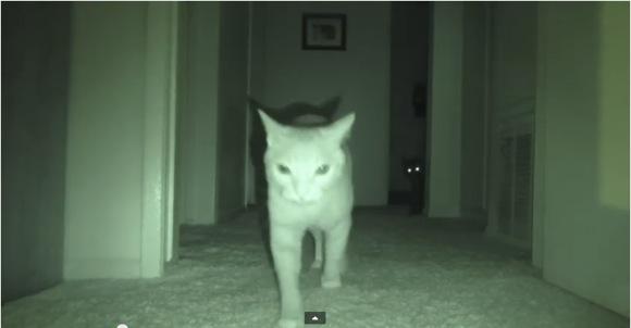 【ニャるほど動画】真夜中にネコって何やってるの? ナイトスコープで撮影してみたらこうなった!