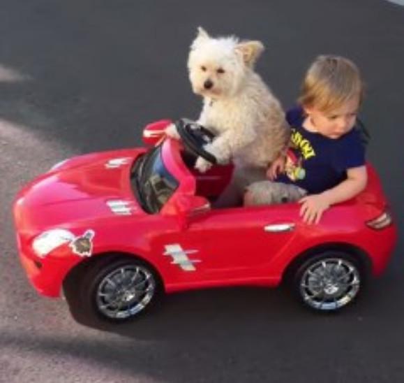 【動画あり】芸達者にもほどがある! ドヤ顔で運転するワンコのドライビングテクニックがマジすごい!!